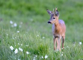 一组可爱的小鹿图片欣赏