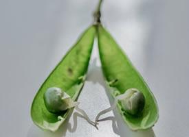 一组好看新鲜的豌豆图片