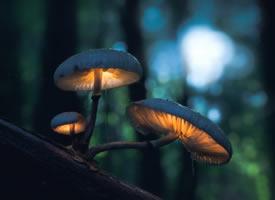 一组密林深处唯美的蘑菇图片