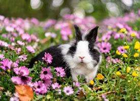 一组超可爱的黑白色小兔兔