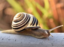 缓慢爬行的蜗牛图片