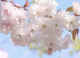 似花瓣献枝 叫花粉遍地