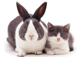 相同颜色的小兔子和猫猫图片