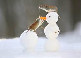 玩雪人的可爱小老鼠图片