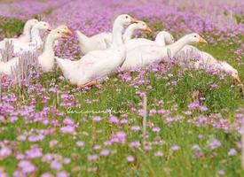花田里,一群寻找春天的小伙伴