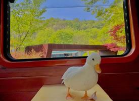 小鸭子的白塔公园一日游图片