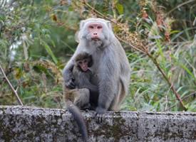聪明淘气的小猴子图片