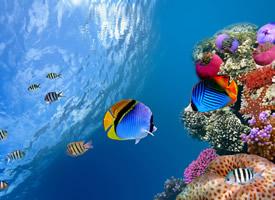 绚烂好看的热带鱼图片