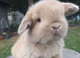 一组小兔子拍照比拼图片