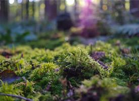 绿色苔藓小清新高清桌面壁纸