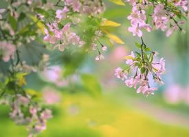 风搅一枝香梦醒的美景图片