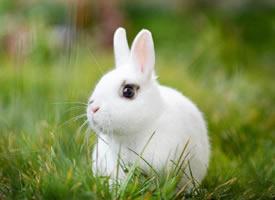 可爱呆萌的兔子摄影高清美图 