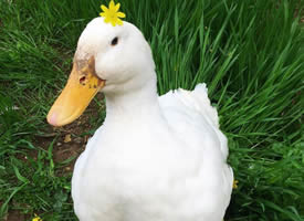 早安,今天也要美美的鸭