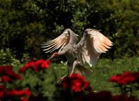 惹人喜爱的朱鹮鸟图片
