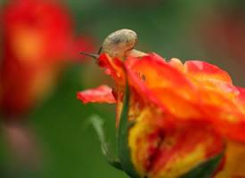 花儿与蜗牛唯美意境摄影高清美图 