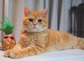 调皮捣蛋的中华田园猫图片