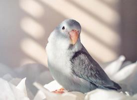我家的小鹦鹉