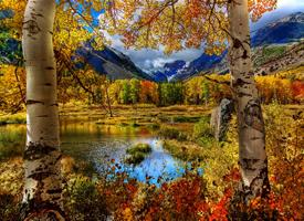 金色深秋风景桌面壁纸图片