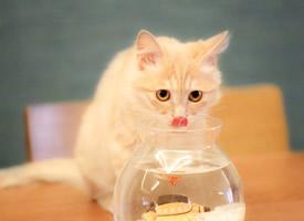 逗乐卖萌的宠物猫图片