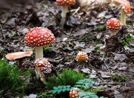 可爱的小蘑菇图片桌面壁纸
