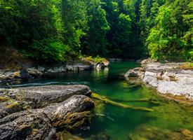 绿色树林路树护眼风景壁纸图片