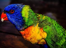 漂亮迷人的鹦鹉图片