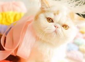 可爱萌宠加菲猫小猫咪摄影图片