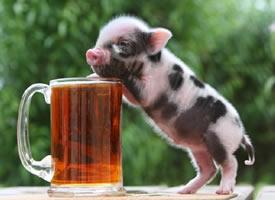可爱与气质并存,时尚的猪宝宝已上线
