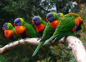 形态各异的野生鹦鹉