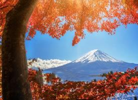 红枫季,日本秋天正确的打开方式