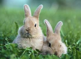 萌系可爱的小兔兔摄影高清美图 