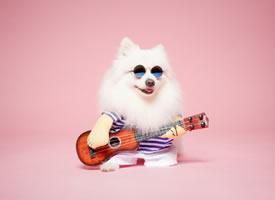 弹吉他帅气的博美狗狗