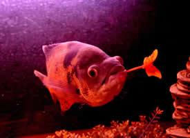 一组热带鱼献花图片