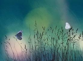 梦幻唯美的蝴蝶摄影高清美图 