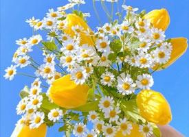 一组超唯美的黄色花束图片