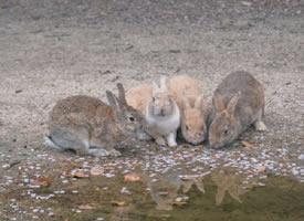 春天里的小兔子图片