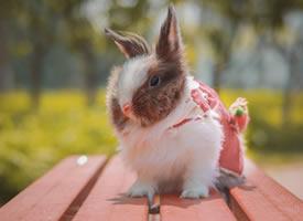 一组超可爱软萌的小兔子