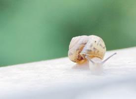 日系小清新蜗牛摄影高清美图
