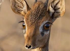 一组野生动物可爱的眼神图片