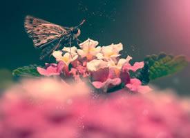 一组意境感超强的蝴蝶拍摄图