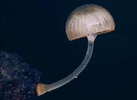 一组超漂亮的小蘑菇图片