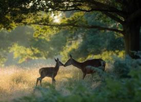 鹿见人而惊 消失于林深