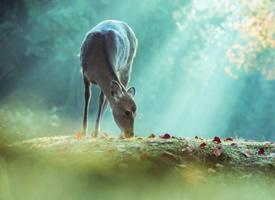 一组很可爱奈良的鹿