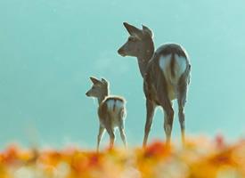 一组超唯美意境中的小鹿