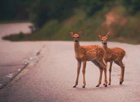 一组眼睛清澈明亮的小鹿