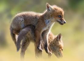 小狐狸们带你开启新的一天