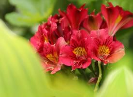 一组红红火火的花朵图片