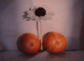 想把橘子的甜味,分享给你们