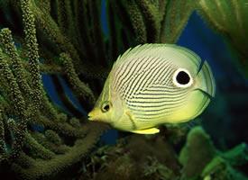 种类繁多的热带鱼图片
