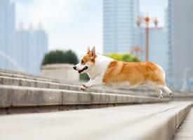 一组城市街拍的狗狗图片